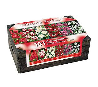 101 Blumenzwiebeln