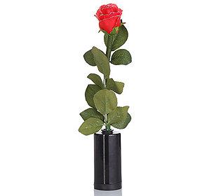 Rose leuchtend