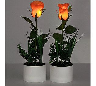 2 leuchtende Rosen