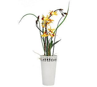 Stern-Orchidee leuchtend