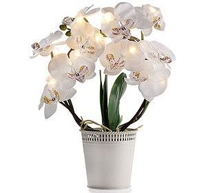 Orchidee leuchtend