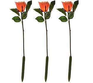 3 Rosen leuchtend