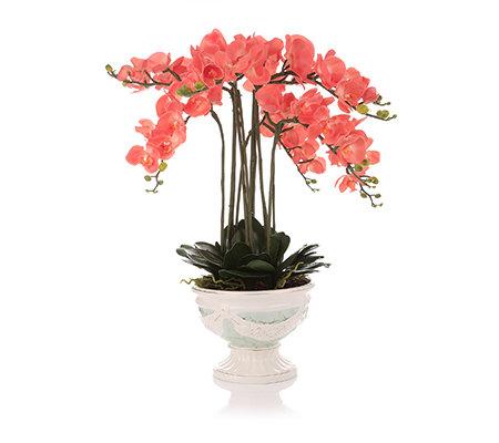 Qvc Lumida Flora