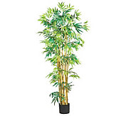 5 Bamboo Tree by Nearly Natural - H162300
