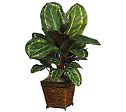 Maranta Plant w/Basket by Nearly Natural - H179300