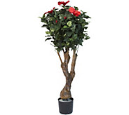 Pure Garden Hibiscus Tree with Flowers - H291700