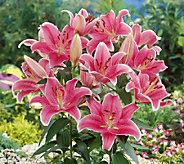 Robertas 8-Piece Sorbonne Oriental Lily - H285702