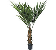 Pure Garden 60 Kentia Palm Tree - H291702