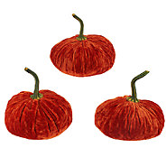 3-Piece Velvet Pumpkins by Valerie - H203605