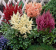 Cottage Farms 4-Piece Born in the USA Astilbe Collection - H285810