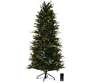 ED On Air Santas Best 7.5 Bay Leaf Tree by Ellen DeGeneres - H206412