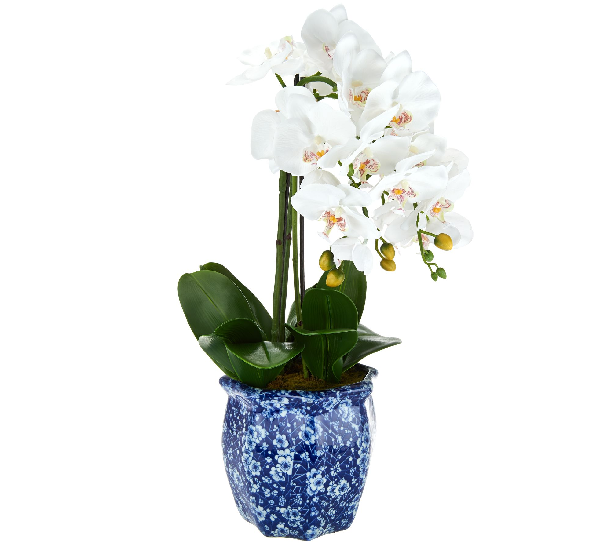 22 orchid in ceramic pot by valerie page 1 qvc reviewsmspy