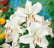 Robertas 8-Piece Casa Blanca Oriental Lilly - H285714