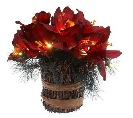 bethlehemlights batteryoperated amaryllis pine in twig base with. Black Bedroom Furniture Sets. Home Design Ideas