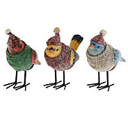 Frosted Snow Birds with Sweaters by Valerie - H196716