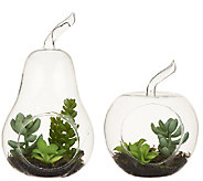 ED On Air Glass Apple & Pear Tabletop Succulents by Ellen DeGeneres - H204917