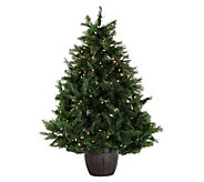 Fraser Hill Farm Prelit 5 Northern Cedar Teardrop Tree in Pot - H294818