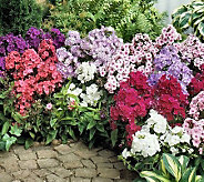 Cottage Farms 10-Piece Tall Phlox Value Mix - H366019