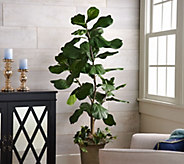5 Potted Fiddle Leaf Tree in Pot by Valerie - H210720