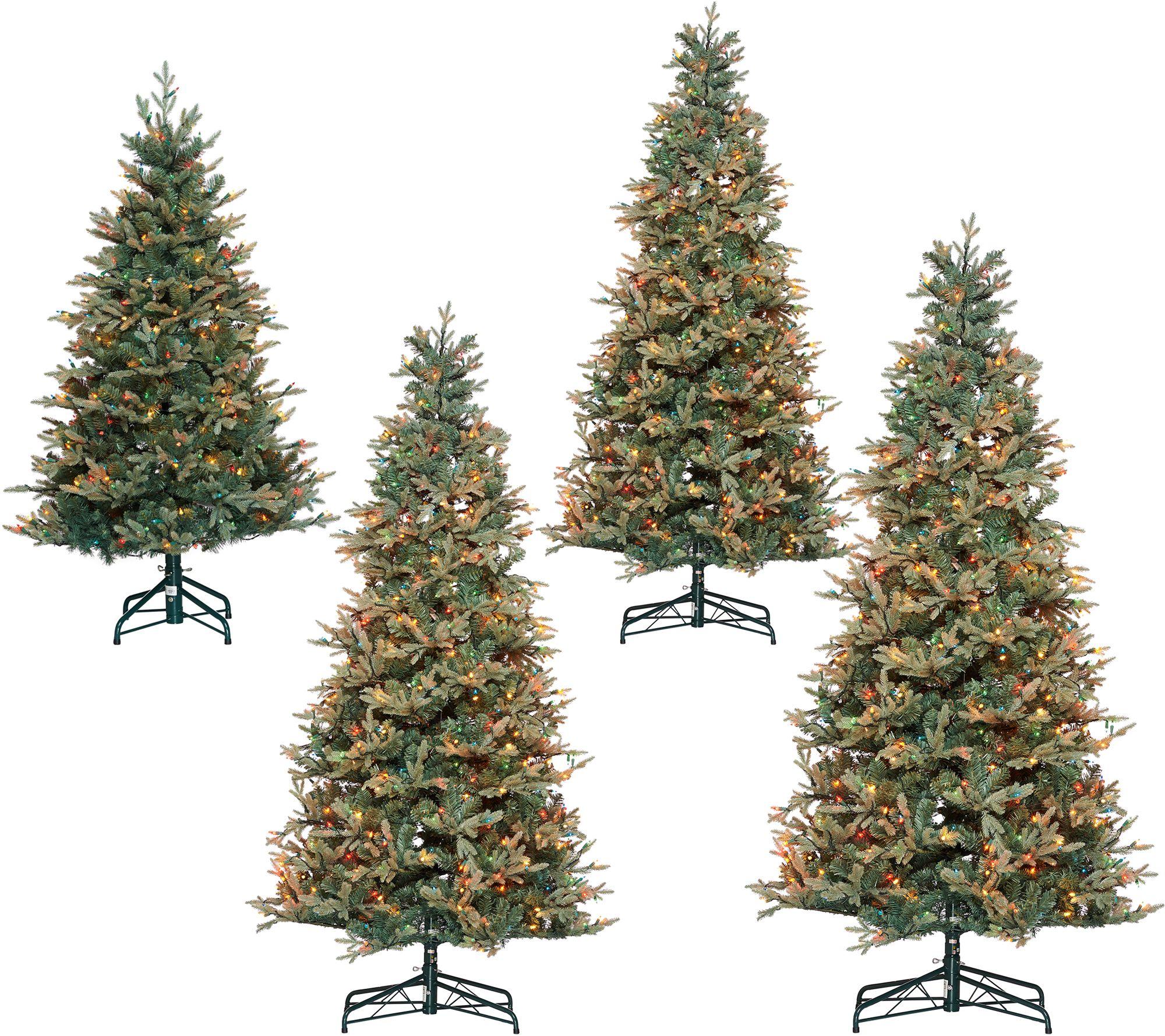 Bethlehem Lights Prelit Blue Spruce Christmas Tree