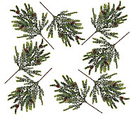 Set of 8 Snowy Hemlock Picks by Valerie - H205323