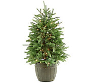 Fraser Hill Farm Prelit 4 Potted Pine Tree with Clear Lights - H294826