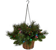 Bethlehem Lights Canterbury Hanging Basket with Pinecones - H208931