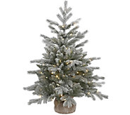 36 Frosted Sable Pine Tree with Clear Lights by Vickerman - H289831