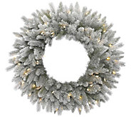 24 Frosted Sable Pine Wreath with  Clear Lights by Vickerman - H289835