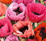 Robertas 4-Piece Oriental Poppy Collection - H295138