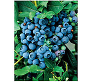 Robertas 2-Piece Berkeley Blueberry - H174840