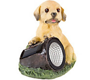 Pure Garden Solar LED Light & Battery-OperatedDog Statue - H293149