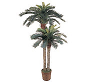 6 & 4 Sago Palm Double Potted Tree by NearlyNatural - H179252