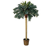 6 Sago Palm Tree by Nearly Natural - H179254