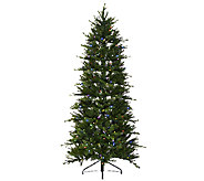 ED On Air Santas Best 7.5 Norway Spruce Tree by Ellen DeGeneres - H205955