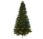 Mr. Christmas Wisconsin Fir 6.5Pre-Lit LED Tree with 5 Year LMW - H196656