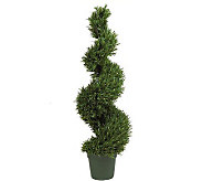 4 Rosemary Topiary by Valerie - H187957
