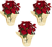 Set of 3 18 Poinsettia Plants by Valerie - H203460