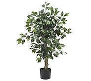3 Ficus Tree by Nearly Natural - H179262