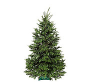 Del Week 12/12 Carolina Fraser Fresh Cut 6.5-7Fraser Fir Tree - H364162