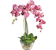 18 Phalaenopsis in Glass Vase by Nearly Natural - H292164
