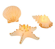 Set of 3 Candle Impressions Seashell Flameless Candles w/Timer - H202268