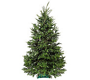 Del Week 12/12 Carolina Fraser Fresh Cut 7.5-8Fraser Fir Tree - H364172