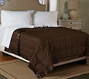 Northern Nights Dotty 300TC Cotton 650FP Reversible QN Down Blanket - H207573