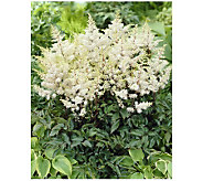 Robertas 3 Piece Rock and Roll White Astilbe - H174874
