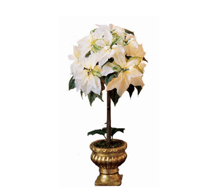 Bethlehem Lights Prelit 3' White Poinsettia Topiary with Urn