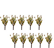 As Is 10-Piece Sequined Berry Decorative Clips - H207581