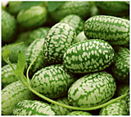 Cottage Farms 3-Piece Mexican Sour Gherkin Cucumber - H290884