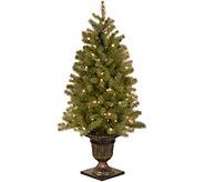 National Tree Company 4 Lit Downswept DouglasFir Tree - H294384