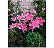 Robertas 24-Piece Sorbonne Oriental Lily - H138386